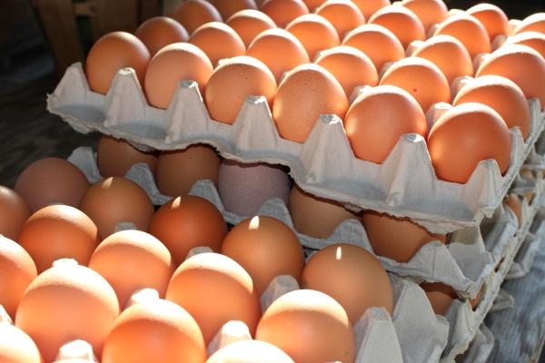Eier groß Braun