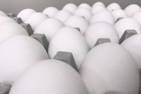Eier groß Weiß